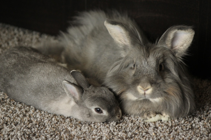 pet house rabbits