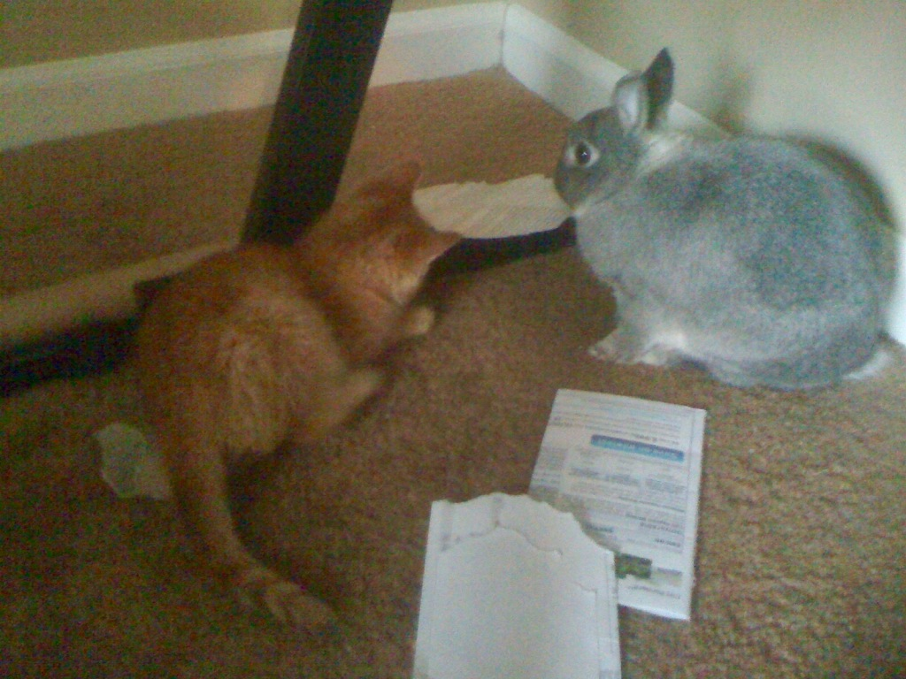 Henry the rabbit with Herman the kitten