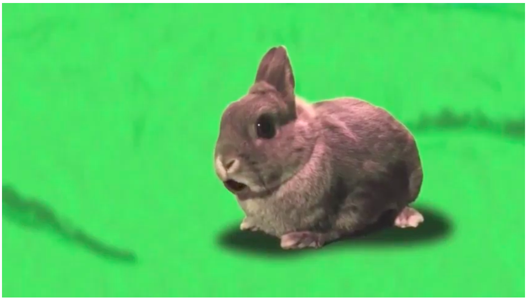 Henry the rabbit in a movie