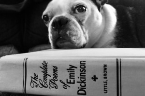 Dog with Emily Dickinson book